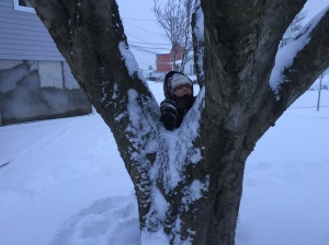 Stuck in a tree
